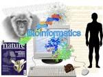 What Is Bioinformatics Scope Career Opportunities