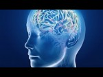 The Brain And Space Online Course By Duke University