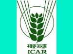 Icar Mathura University Ink Mou Growing Breeder Seed