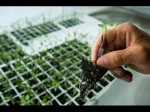 Top 10 Universities For Agriculture Sciences In The World