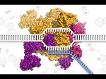 Online Course On Molecular Bio Transcription And Transposition By Mit