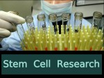 What Is Stem Cell Research Scope And Career Opportunities
