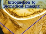Introduction To Biomedical Imaging Online Course By Univ Of Queensland
