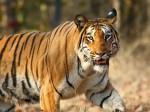 Wildlife Institute Of India (WII) Recruitment: Call For Scientist Post