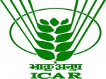 Icar Indian Institute Of Oil Palm Research Recruitment Call For Srf Post