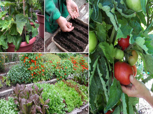 Online course in Vegetable Gardening