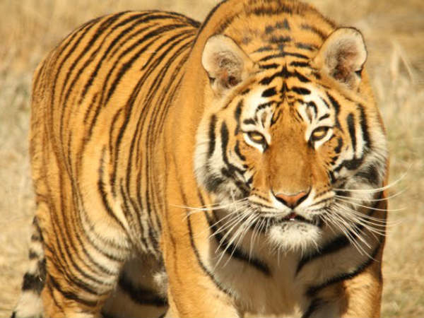 Teachers will create wildlife awareness in Assam