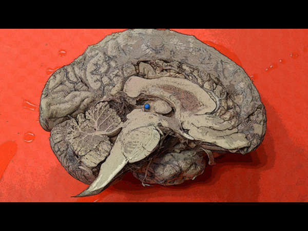 Learn how to understand your brain