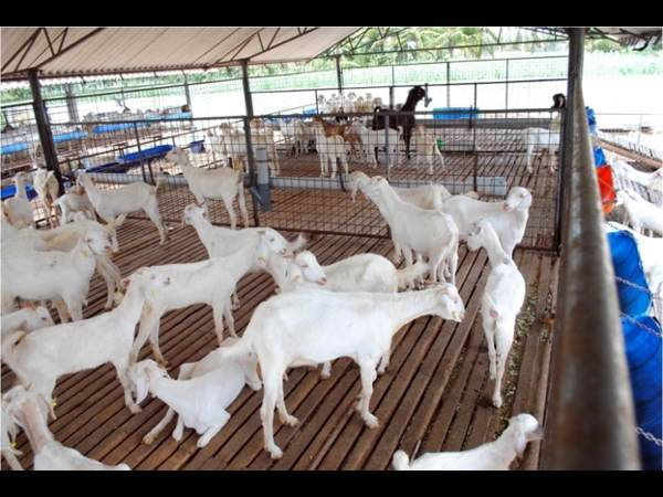 Certificate Course in Laboratory Animal Science