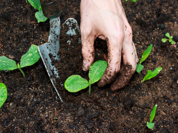 What is soil science scope and career opportunities for What is soil