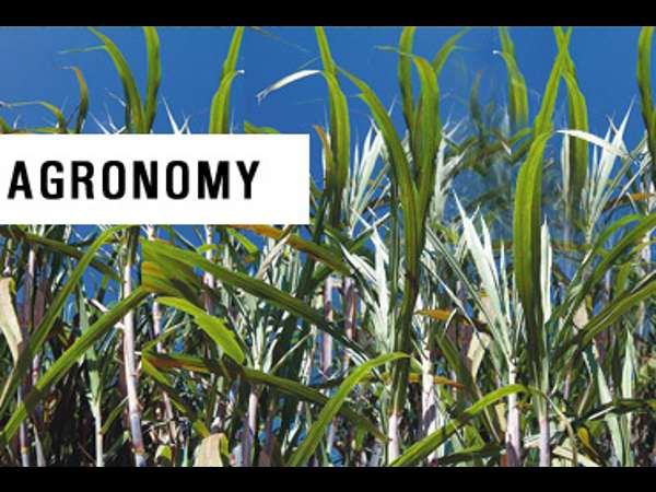 What is Agronomy? - Scope and Career opportunities