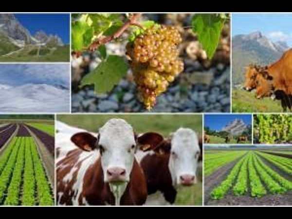 What is Agribusiness?