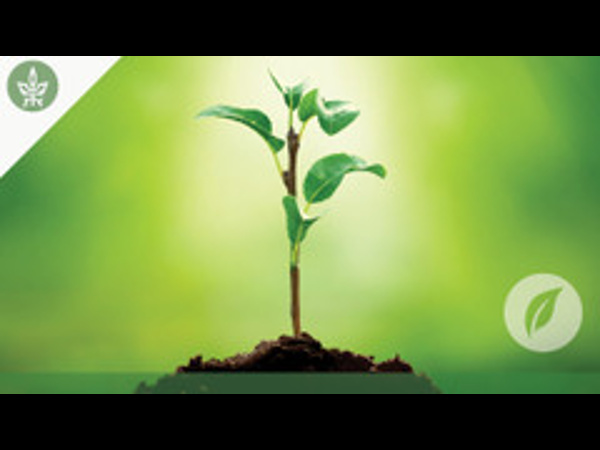 What a Plant knows? Online course by Tel Aviv Univ