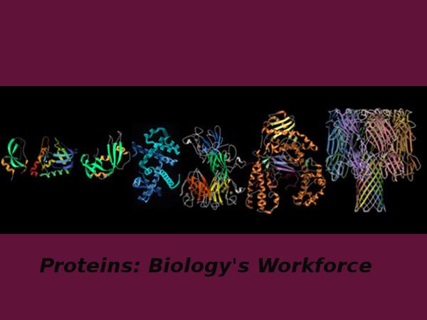 Proteins: Biology's Workforce - Online course