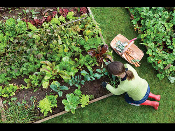 Canada to set up horticulture varsity in Haryana