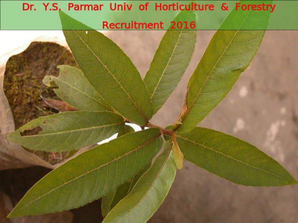 Dr. Y.S. Parmar University Hiring 9 Various Posts