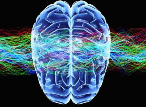 Online Course on Medical Neuroscience from Duke