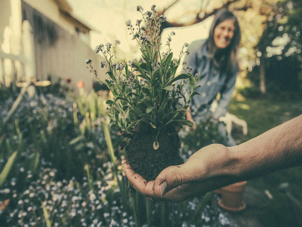 How To Become A Botanist