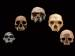 Arizona State University Offers Online Course On Human Origins